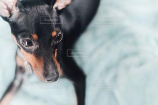 黒と茶色の犬の写真・画像素材[751778]