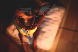 クッションの上に座っている犬の写真・画像素材[817237]