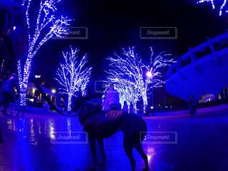夜ステージの前に立っている男の写真・画像素材[818657]