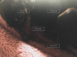 近くに猫のアップの写真・画像素材[1021493]