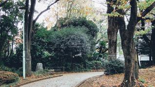 公園の木の写真・画像素材[1036308]