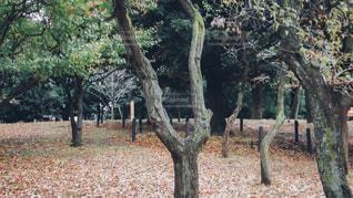 フォレスト内のツリーの写真・画像素材[1036310]