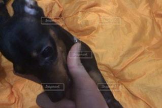 ベッドの上に座っている犬の写真・画像素材[1061253]