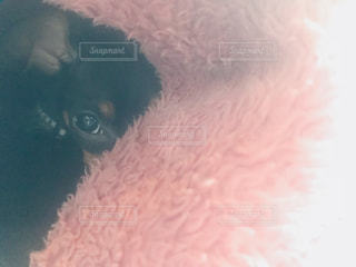 近くに犬のアップの写真・画像素材[1076104]