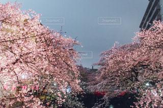 近くの木のアップの写真・画像素材[1078187]