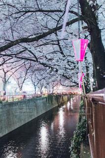 川以上の長い橋の写真・画像素材[1078189]