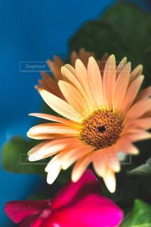 近くの花のアップの写真・画像素材[1080587]