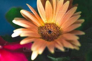 近くの花のアップの写真・画像素材[1080589]