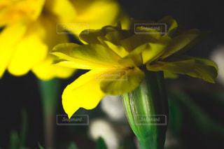 近くの花のアップの写真・画像素材[1080590]
