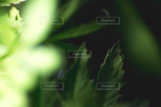 近くの緑の植物をの写真・画像素材[1080591]