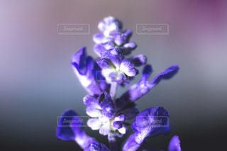 紫の花と花瓶の写真・画像素材[1080615]