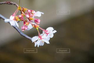 近くの花のアップ - No.1084079