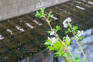 近くに池のアップの写真・画像素材[1084083]