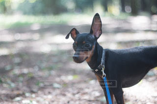 草に茶色と黒犬立っています。の写真・画像素材[1084278]