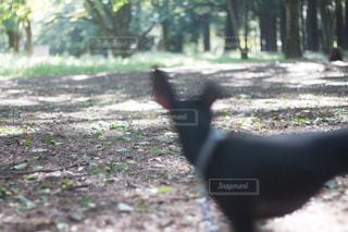 公園内の黒犬 - No.1084279