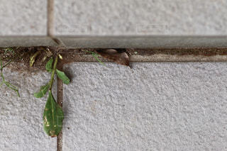 建物の側に昆虫の写真・画像素材[1086904]