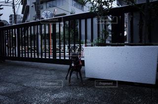 建物の前にあるベンチに座っている人の写真・画像素材[1087200]