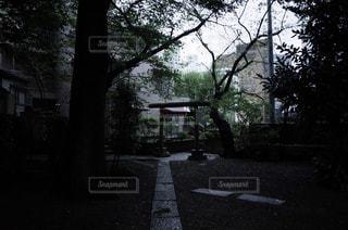道の端に木のパスの写真・画像素材[1087210]