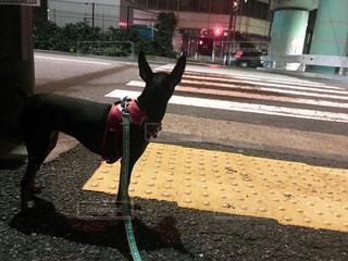 歩道に犬の地位の写真・画像素材[1165439]