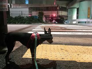 建物の前に立っている犬の写真・画像素材[1165440]