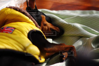 昼寝中の黒い犬。同じ犬の写真は「kt_dog」「kt_pics 犬」でチェックをの写真・画像素材[1759980]