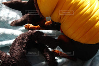 黒い犬と黒い猫のぬいぐるみ。同じ犬の写真は「kt_dog」「kt_pics 犬」で検索を!の写真・画像素材[1765956]