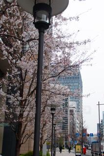 春の訪れ。さくらと街。街の通りのビューの写真・画像素材[1873230]