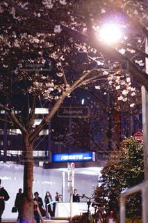 夜桜と街の写真・画像素材[1873292]