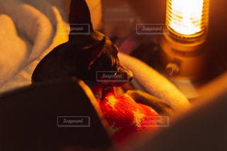 電気ストーブが好きな犬の写真・画像素材[1876431]