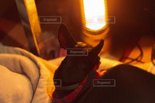 電気ストーブが好きな犬の写真・画像素材[1876433]