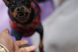 全力変顔!変な顔の犬と飼い主。同じ犬の写真は「kt_dog」でチェックをの写真・画像素材[1885525]
