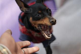 んなあああああああああ!!!!!犬と飼い主。同じ犬の写真は「kt_dog」でチェックをの写真・画像素材[1885527]