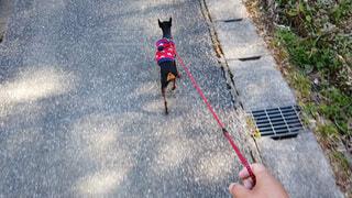 犬の散歩。ペットと飼い主の日常の写真・画像素材[3818783]