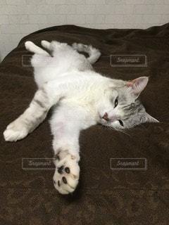 猫の写真・画像素材[79745]