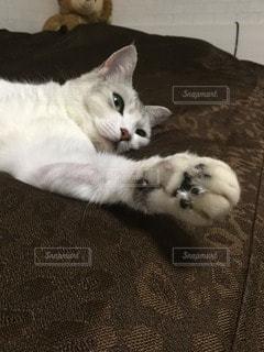 猫の写真・画像素材[79746]