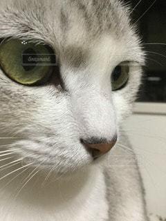 猫の写真・画像素材[79748]