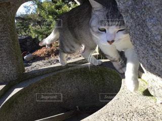 猫の写真・画像素材[79753]
