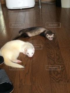動物の写真・画像素材[261405]