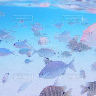 魚の写真・画像素材[260910]