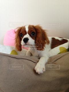 犬の写真・画像素材[415345]
