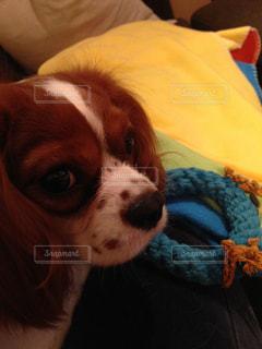 犬の写真・画像素材[651771]