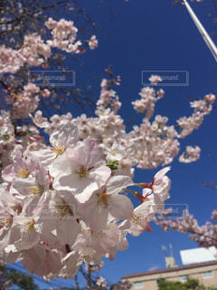 自然の写真・画像素材[261378]