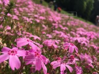 花の写真・画像素材[15053]