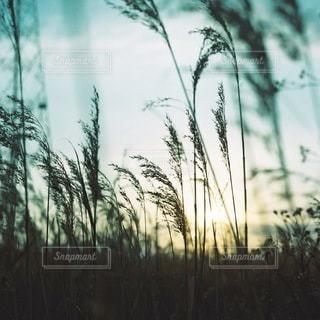 自然の写真・画像素材[5712]