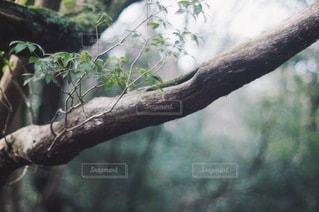 自然の写真・画像素材[5713]