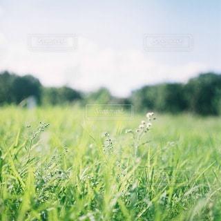 自然の写真・画像素材[5709]