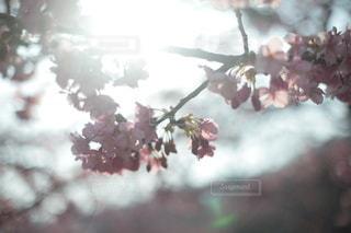 自然の写真・画像素材[5704]