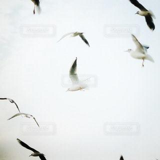 空の写真・画像素材[5703]