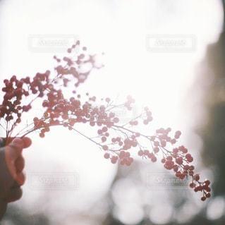 自然の写真・画像素材[5696]