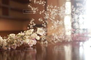 花の写真・画像素材[5692]